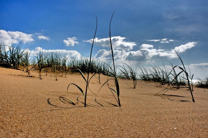 Dunes - #1