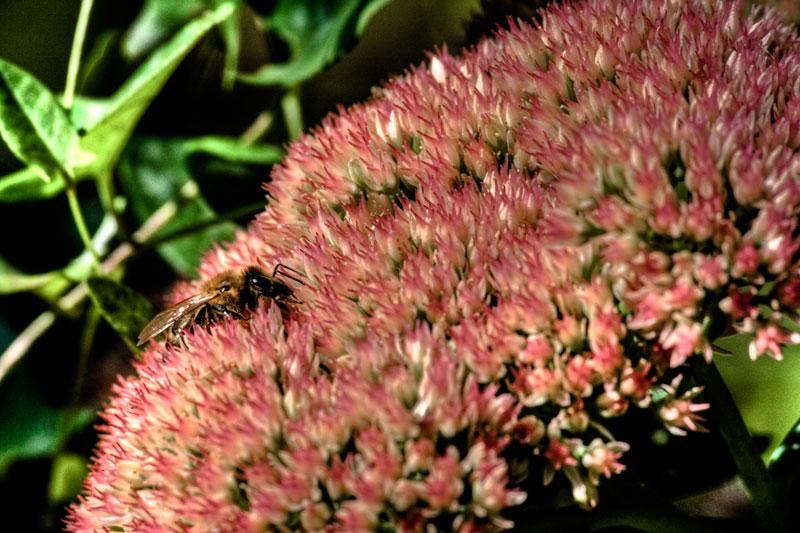 Diner in a flower