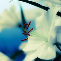 Jump_Photo_iris